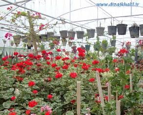 طرح توجیهی پرورش گل و گیاهان زینتی